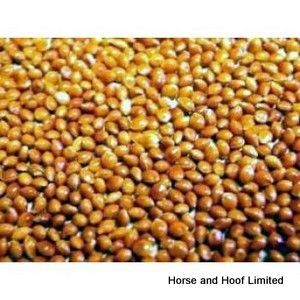 Versele Laga Red Millet seed Bird Food 25kg Versele Laga Red Millet seed is suitable for a wide variety of caged birds including pigeons tropical finches, budgies & big parakeets.