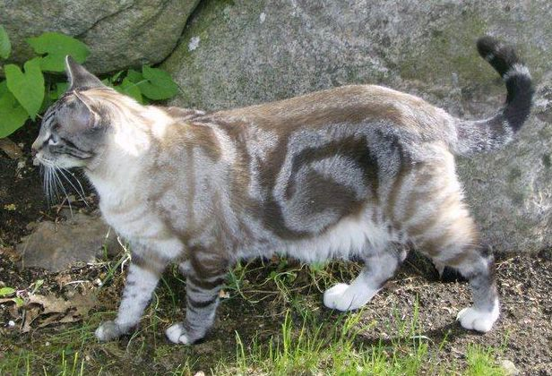 Bece Has These Classic Tabby Markings Her Sister Kiki Has