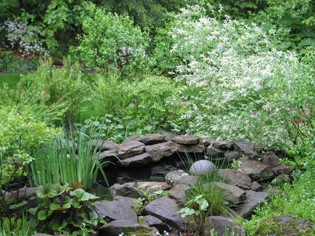 Pin On Garden Pond