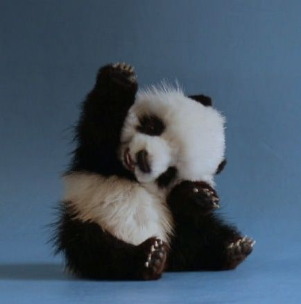 cute little panda waving and smiling