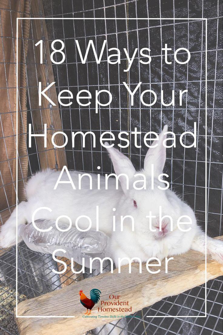 Pin on Animals on the homestead