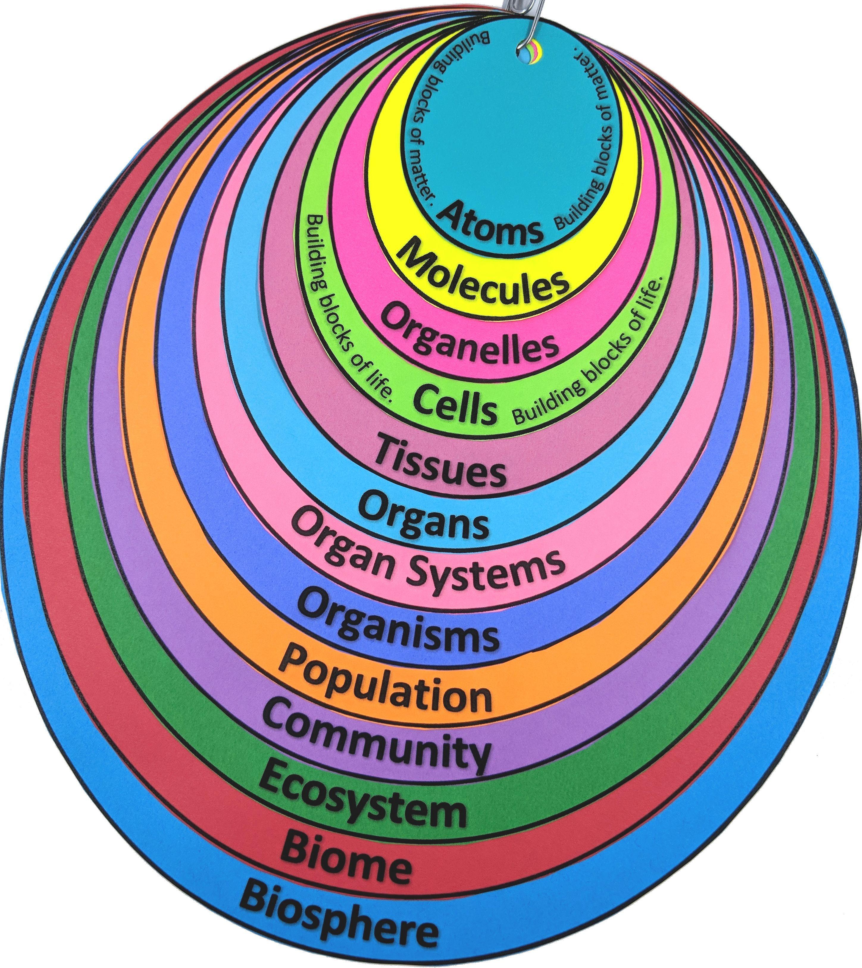 Levels Of Organization Student Note Organizer Distance
