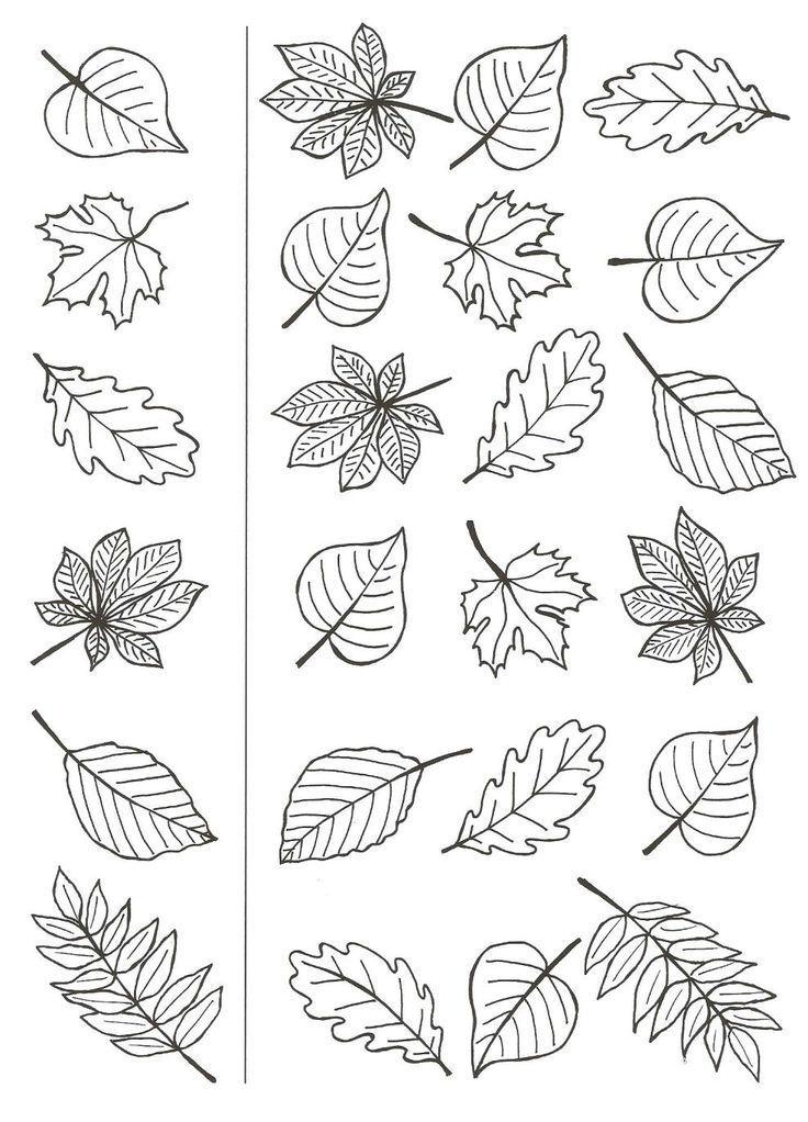 511f130d696aac2e6ce6c9faf9f5cd02 (736 × 1022)   herbst