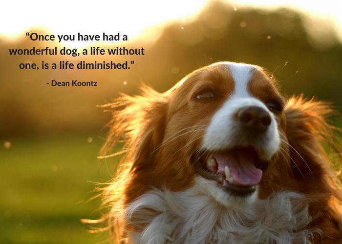 Motivational Quotes With Animals - Goldenacresdogs.com