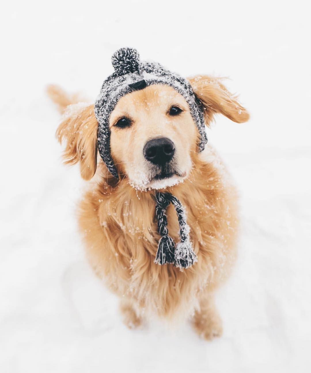One Happy Golden In The Snow Snow Dogs Puppy Dog Eyes Dogs