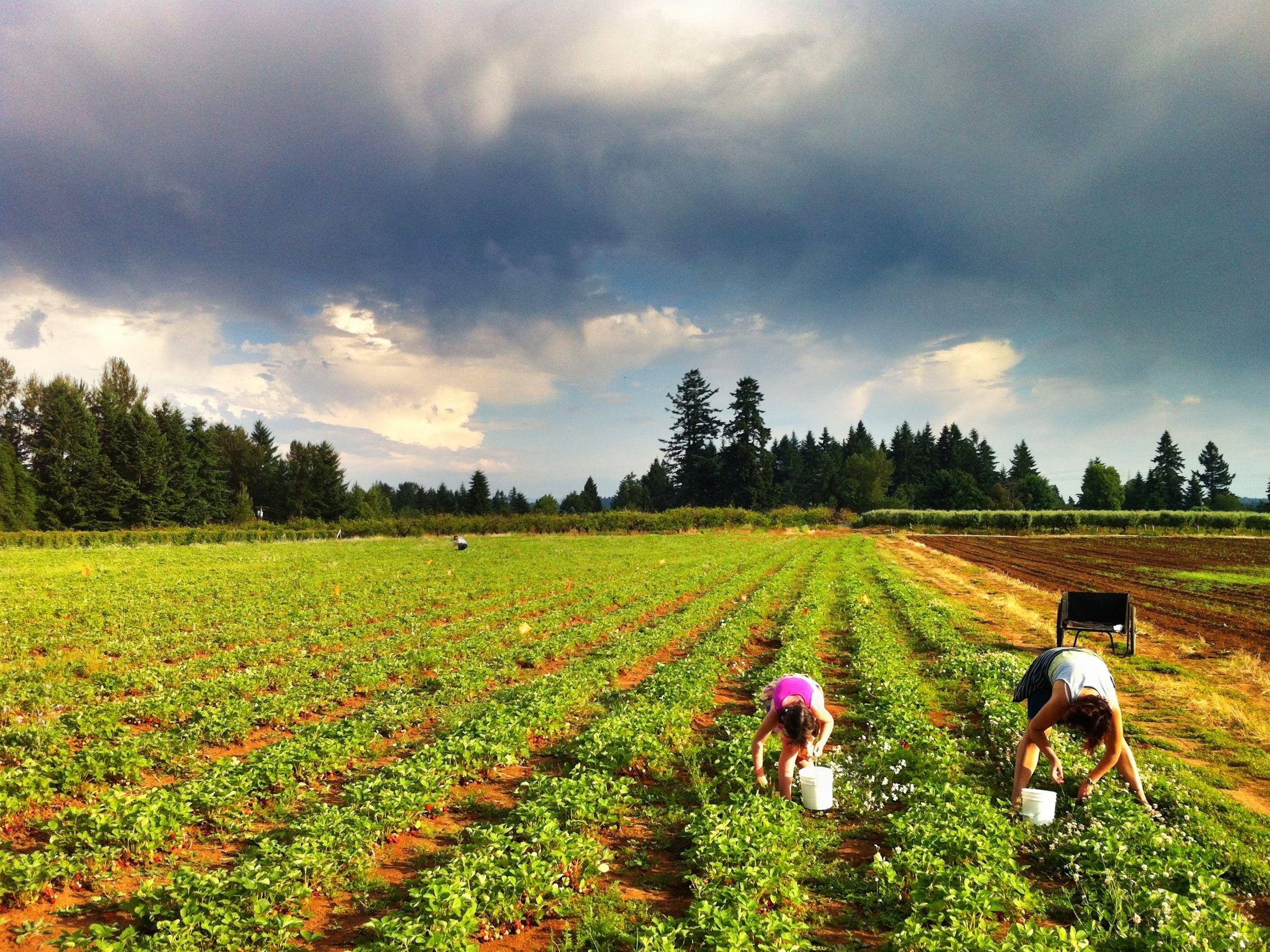 Salem area of Oregon Salem area of Oregon U-Pick farms ...