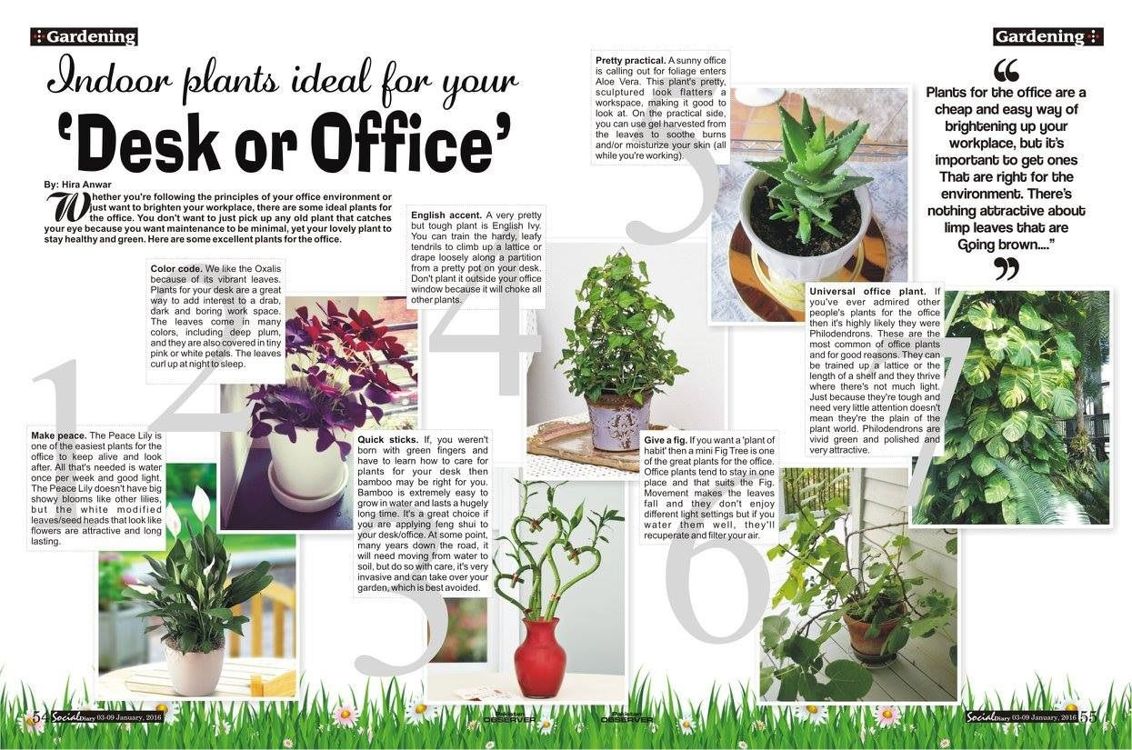 Best Plants For Office Desk Home Furniture Set Check More At Http