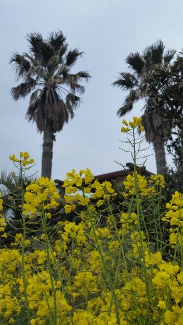 Palm tree yellow flower honours inspo pinterest palm tree yellow flower mightylinksfo Gallery