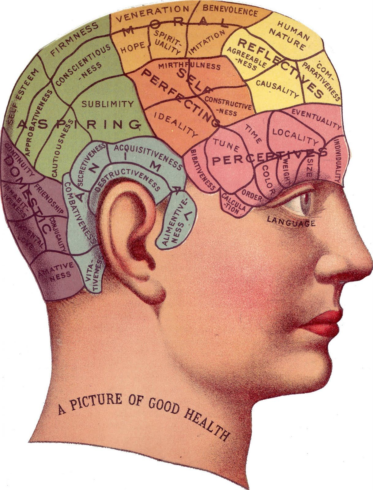 Vintage Clip Art Phrenology Head In Color The Graphics Fairy Clip Art Vintage Phrenology Phrenology Head