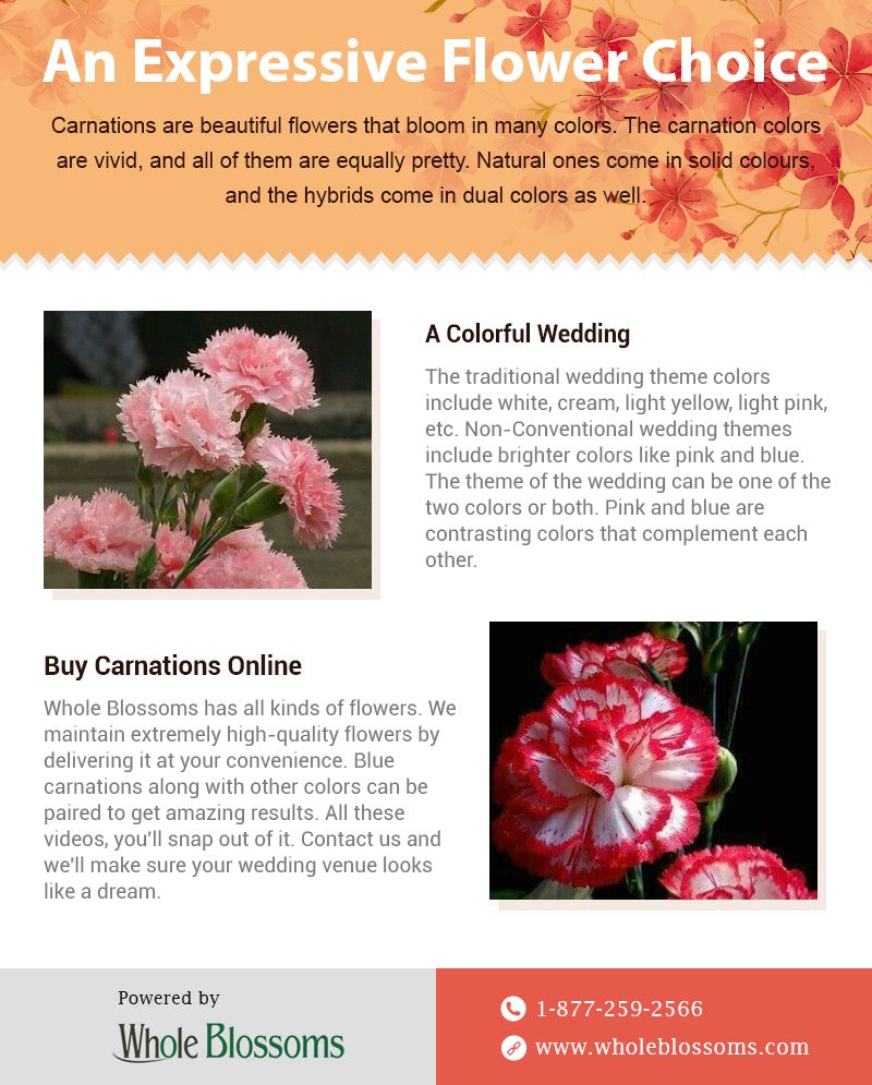 Carnation Flower Create Lovely Decorations With Expressive Flowers Carnation Flower Flowers For Sale Carnations