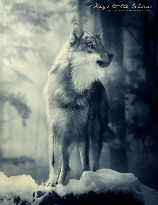 7 Days to the Wolves by Lady Amarillis