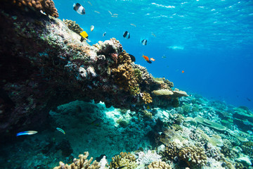 Coral Reef Underwater Duvet Cover 65642506 | VisionBedding