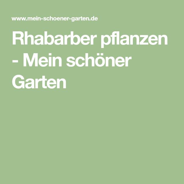 Rhabarber Pflanzen Mein Schoner Garten Clematis Rhabarber Pflanzen Lavendel