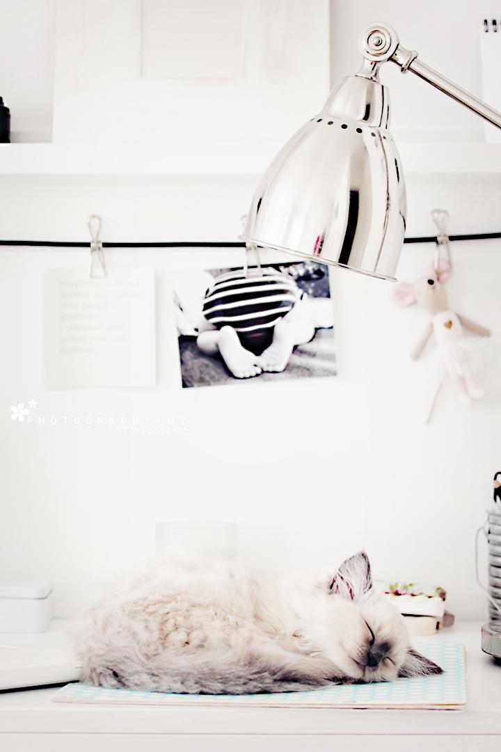 Sleeping kitty on the desk