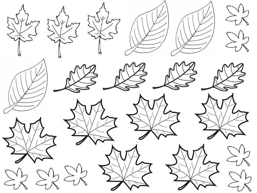 Coloriage Feuille Automne A Imprimer Gratuit | Feuille automne, Coloriage automne, Dessin feuille