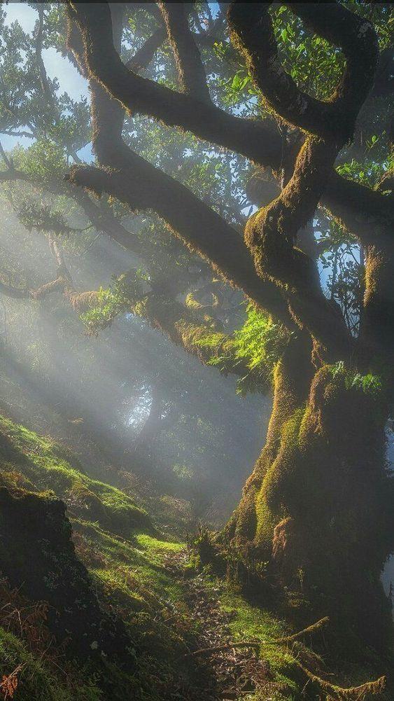 My inner landscape: Photo