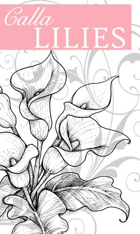 Calla Lilies Graphic Lilies Drawing Flower Drawing Flower Sketches