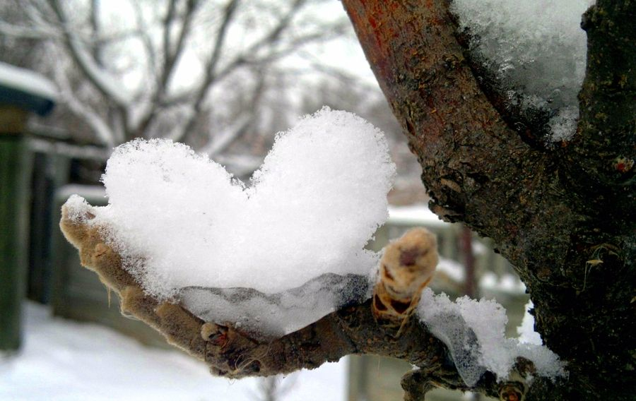 Afbeelding via We Heart It https://weheartit.com/entry ...   Hearts In Nature Winter