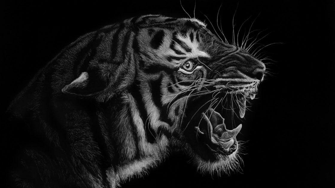 Tigre Noir Blanc Voyage Onirique En 2020 Noir Et Blanc Photo Noir Et Blanc Tigres Noirs