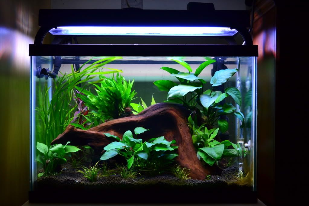 My 20 Gallon Tank Aquarium Design Aquarium Fish Tank