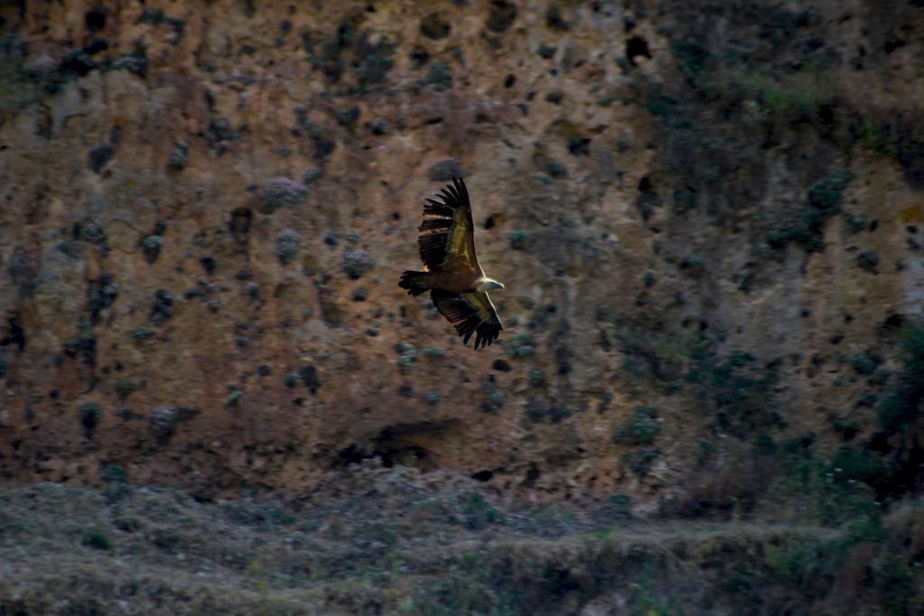 Mis pinitos con la fotografía #naturaleza #buitres #HocesdelDuratón #Segovia