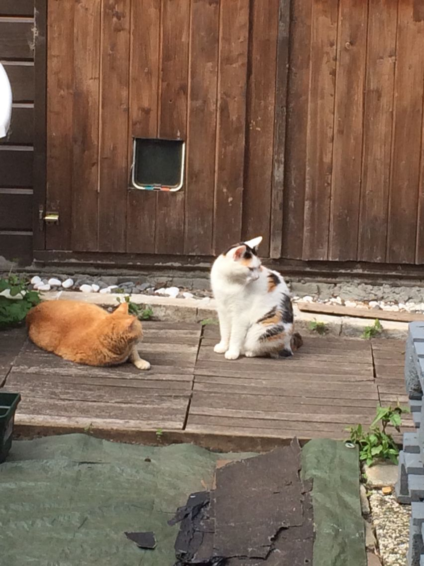 My beautiful cats