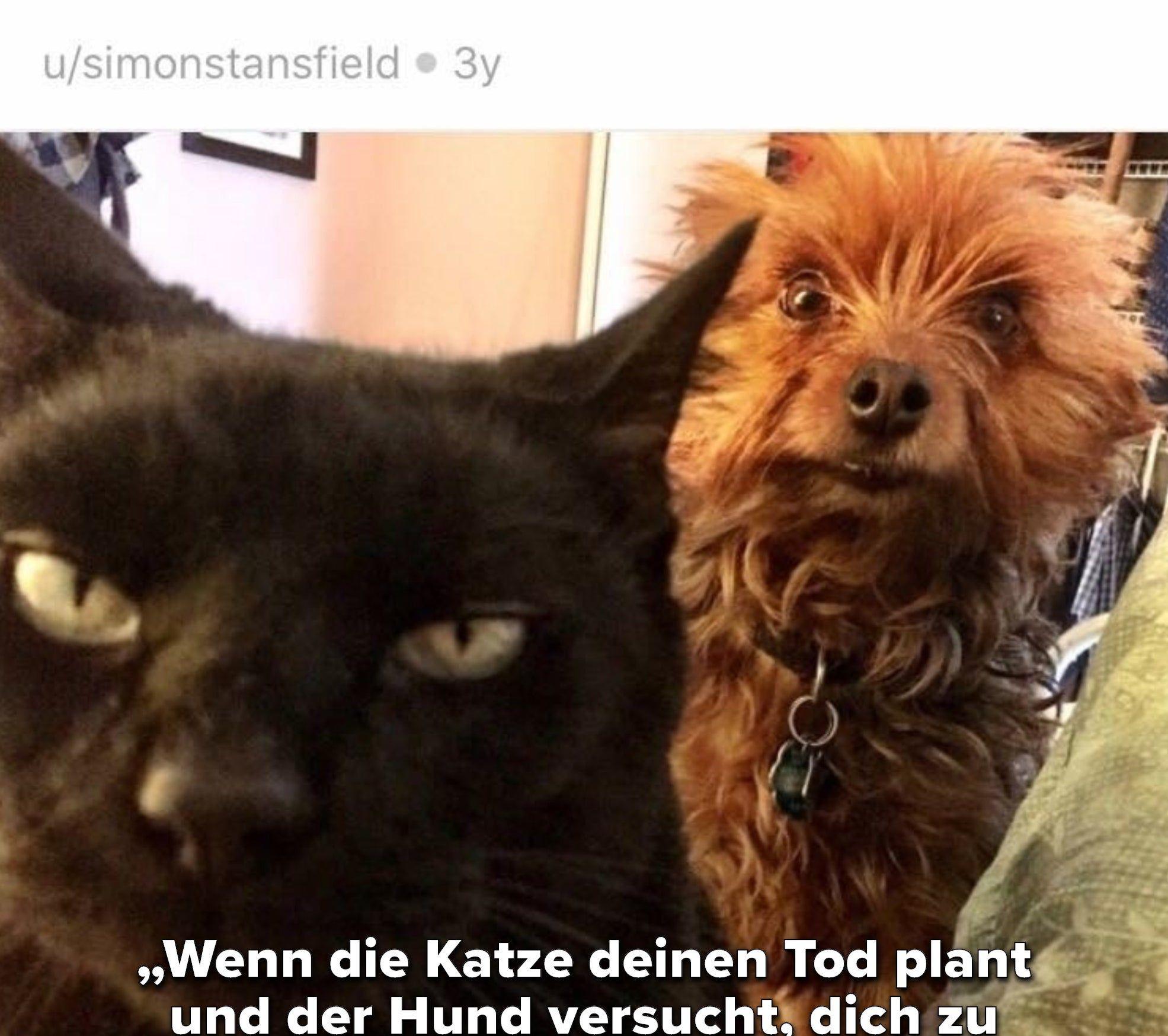 Diese Katze, deren Pläne durchkreuzt wurden: