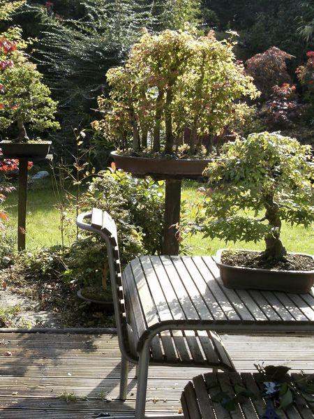 Японский сад своими руками - 08 - Портал Домашний