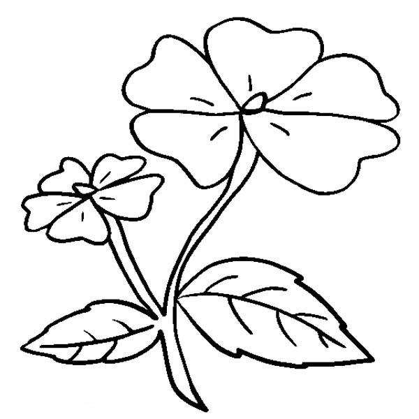 Impatiens Flower Coloring Page Color Luna Flower Coloring Pages Flower Outline Flower Images