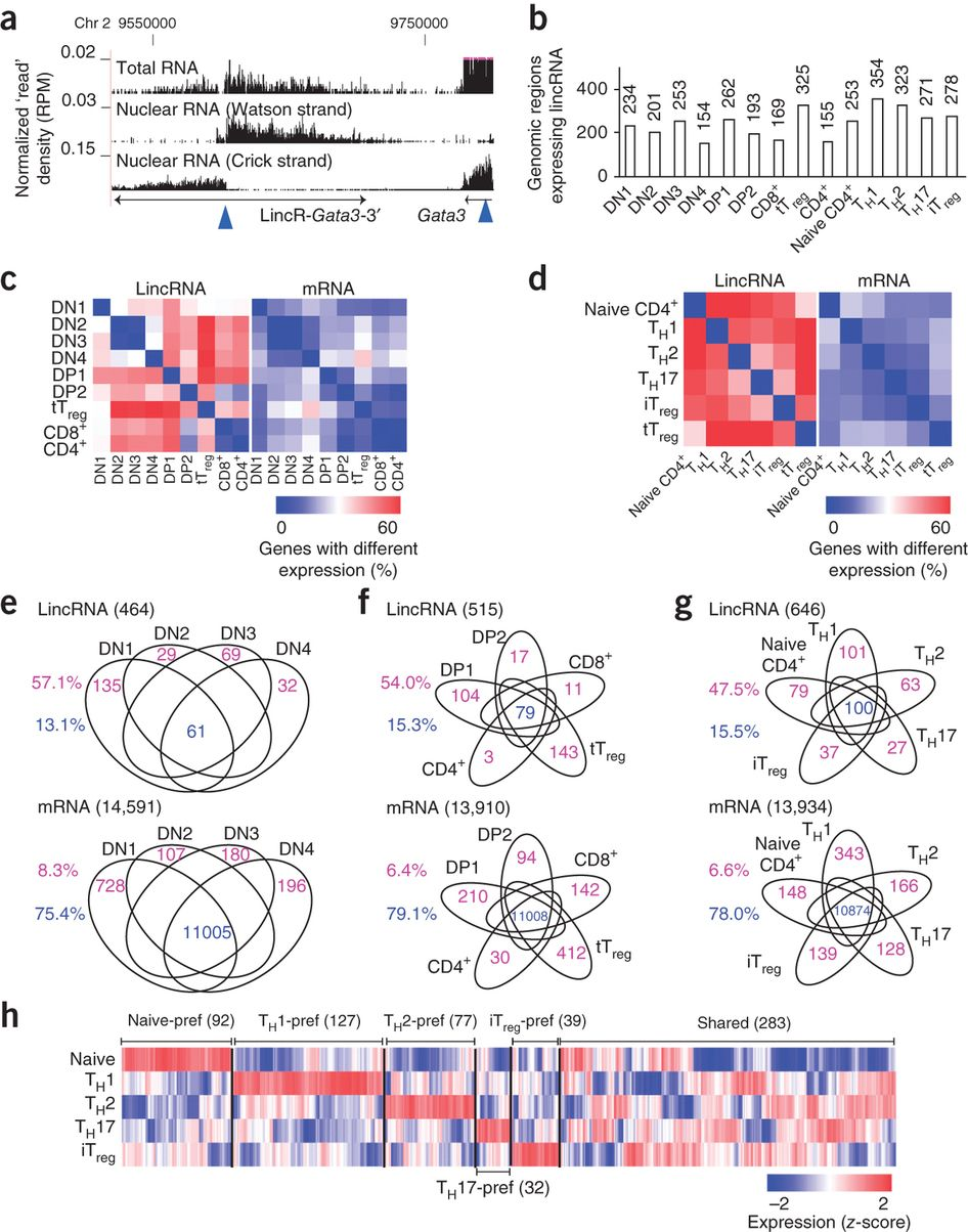 Although Intergenic Long Noncoding Rnas Lincrnas Have Been