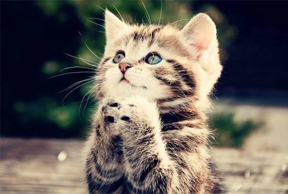 Tiere die beten
