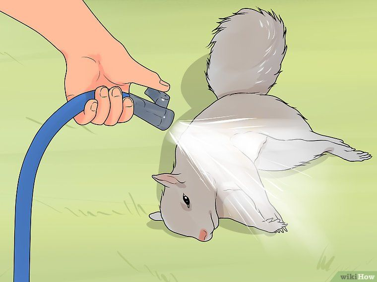 How To Clean A Squirrel 13 Steps With Pictures Squirrel Cleaning Survival Food