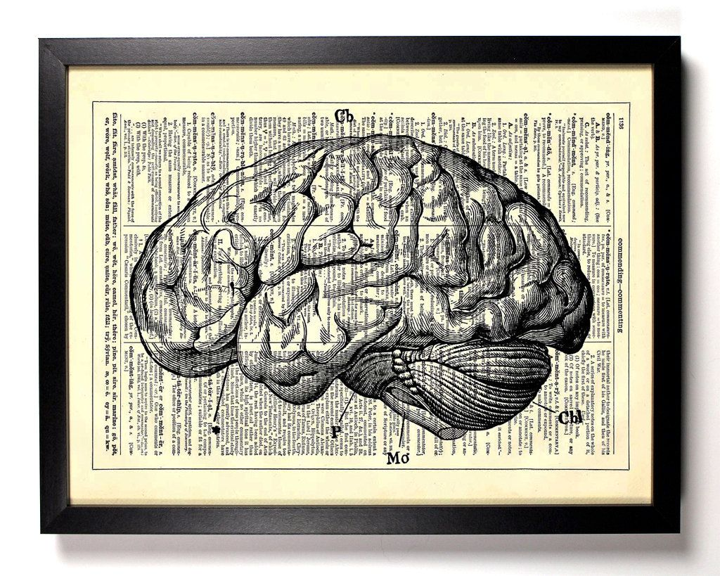 Anatomy brain human anatomy antique book art recycled