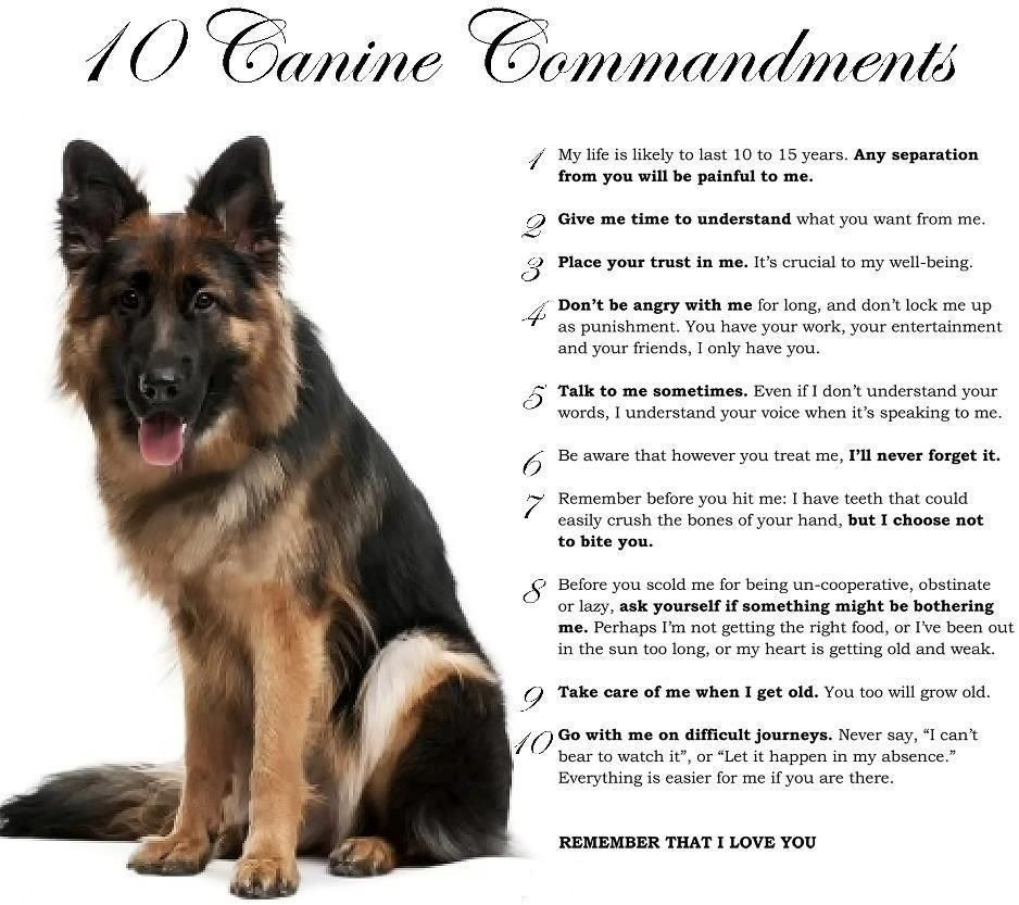 10 Canine Commandments German Shepherd Pictures German Shepherd