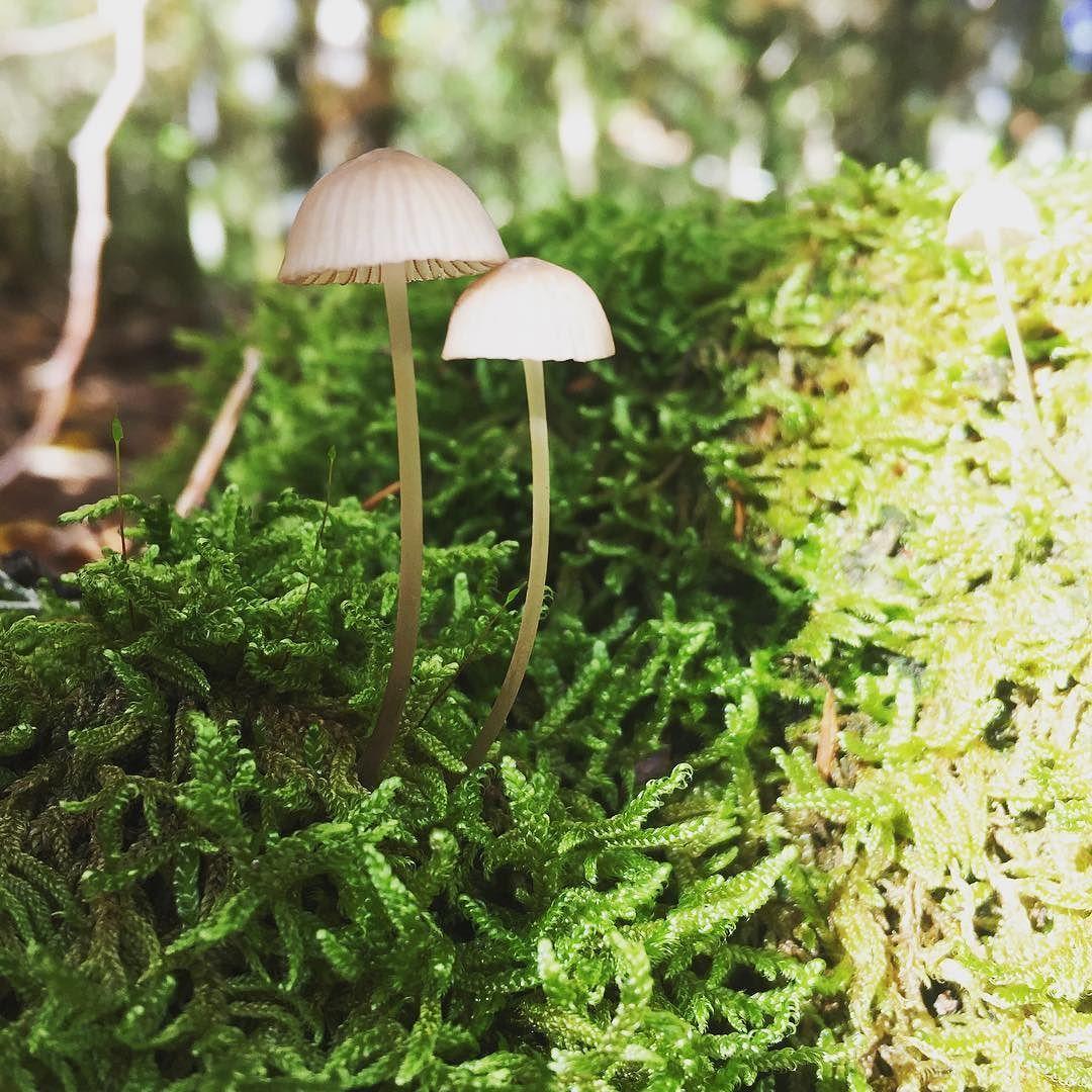 Qué bonito está el bosque en esta época del año!  #forest #otoño #nature