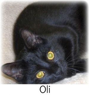 Oli Available At The Little Shelter Animal Rescue In Huntington Ny Cat Adoption Animals Animal Shelter