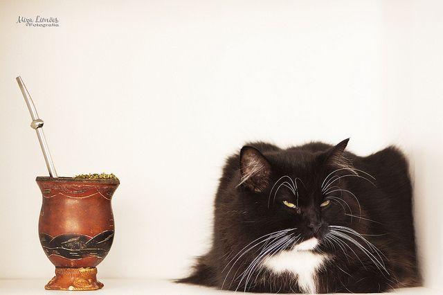 Chimarrão + gato