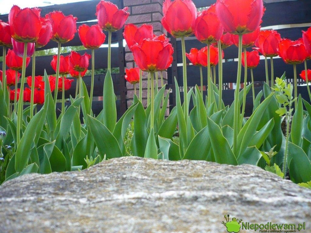 Pin On Ogrod Garden