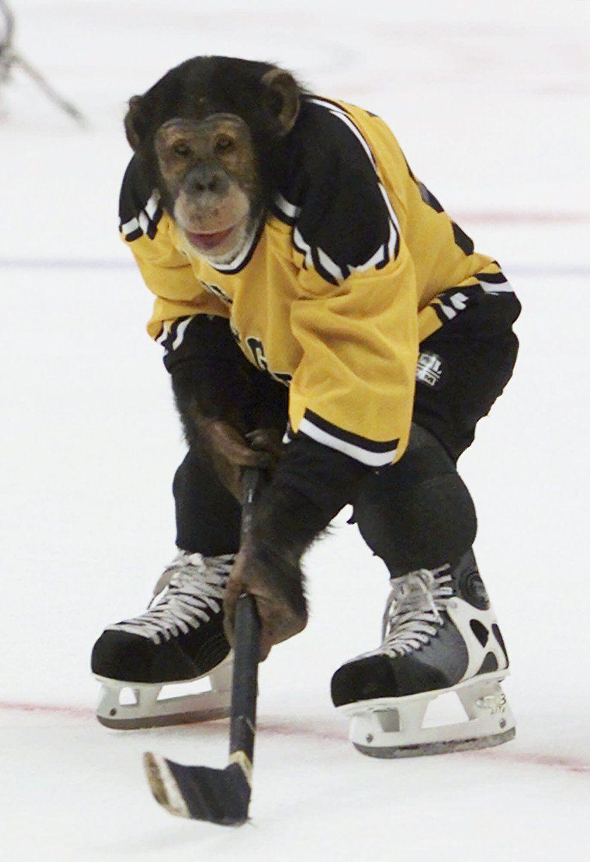 Best And Worst Dressed Monkeys Ikea Monkey Bubbles More Photos Hockey Pictures Ice Hockey Hockey