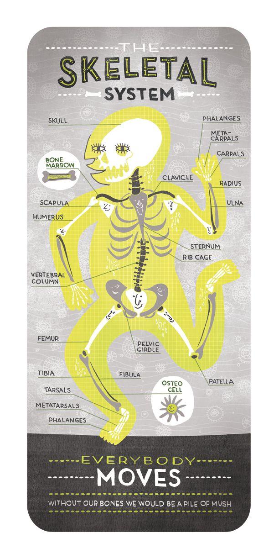 Designer cria infográficos divertidos para aulas de anatomia | Por ...