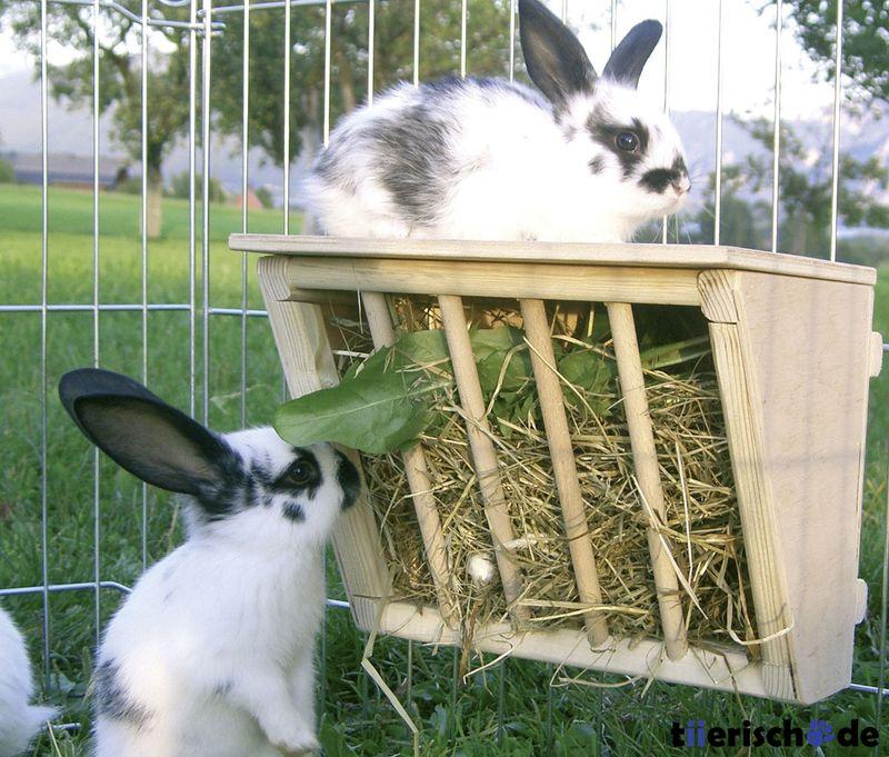 kaninchen heuraufe aus holz mit sitzbrett bunnyhausen kaninchen kaninchen au engehege und. Black Bedroom Furniture Sets. Home Design Ideas