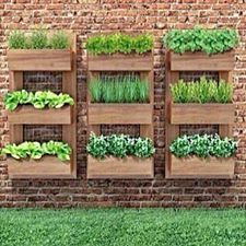 ideia para horta vertical
