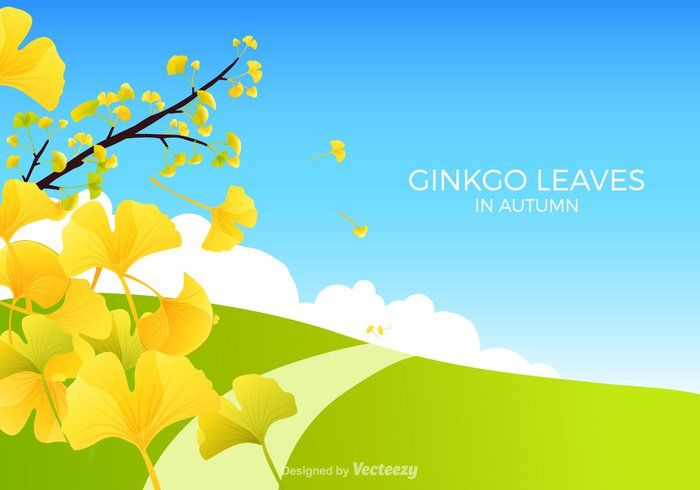 Free Ginkgo Bilboa Vector Illustration - https://www.welovesolo.com/free-ginkgo-bilboa-vector-illustration/?utm_source=PN&utm_medium=welovesolo59%40gmail.com&utm_campaign=SNAP%2Bfrom%2BWeLoveSoLo