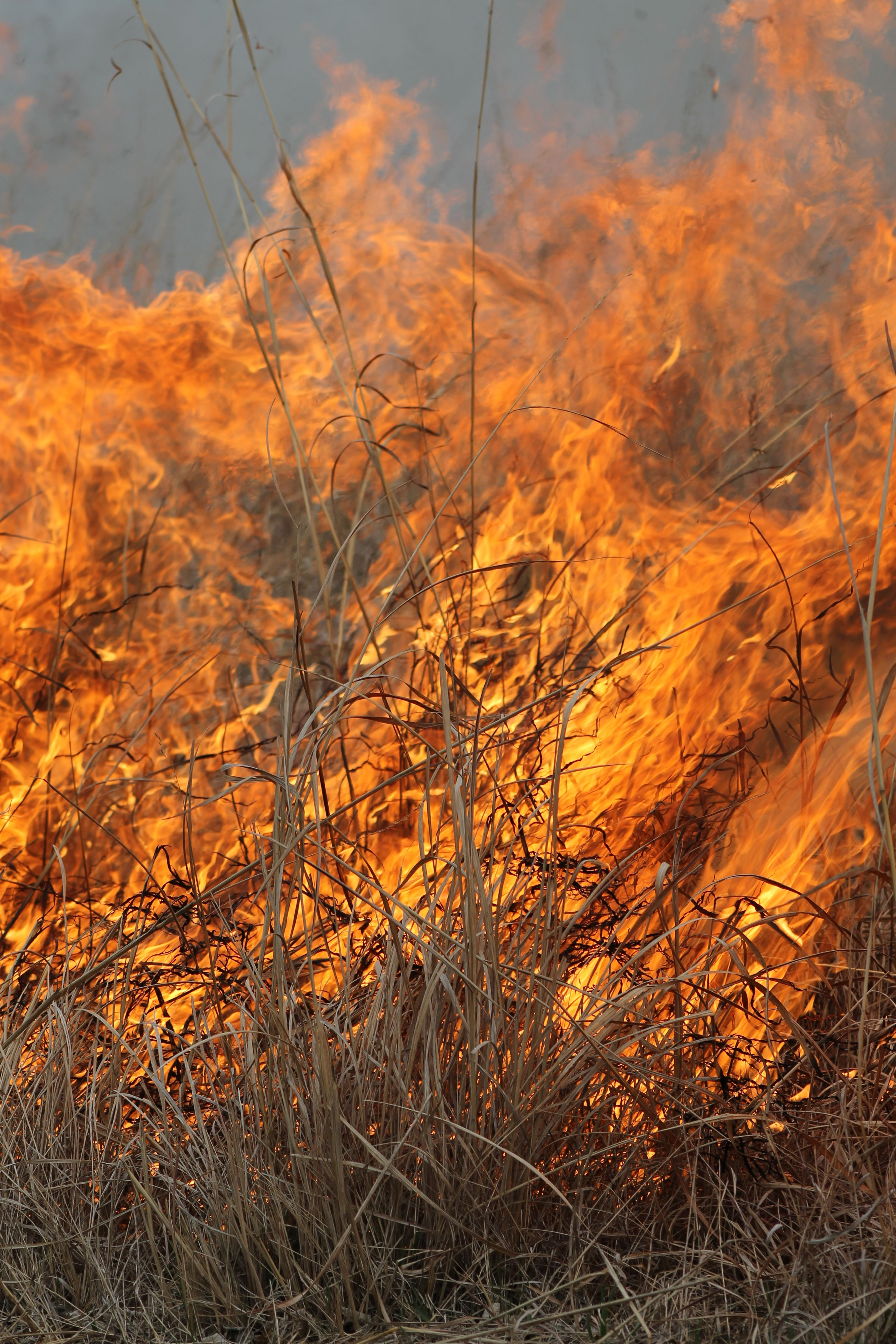 What is a prairie burn? It\'s rejuvenation for the natural grassland ...