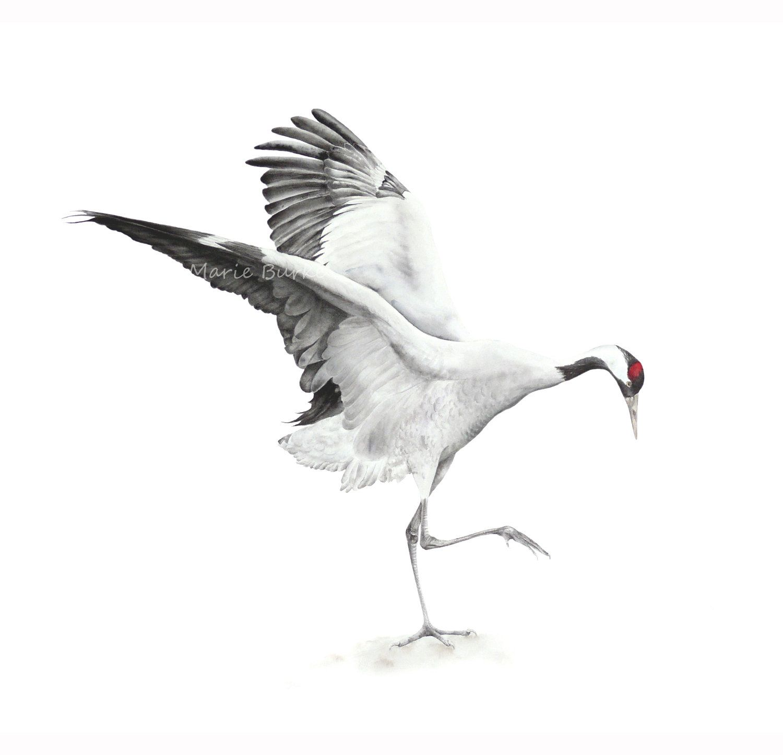 Common Crane - fine art print, 11 x 8 in, bird painting ... - photo#8