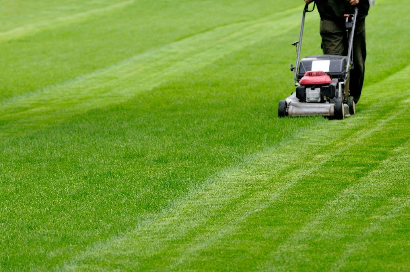 Discover these four best practices for keeping your lawn lush year-round, or ask your provider of #lawncareservice i… | Lawn care, Garden services, Lawn maintenance
