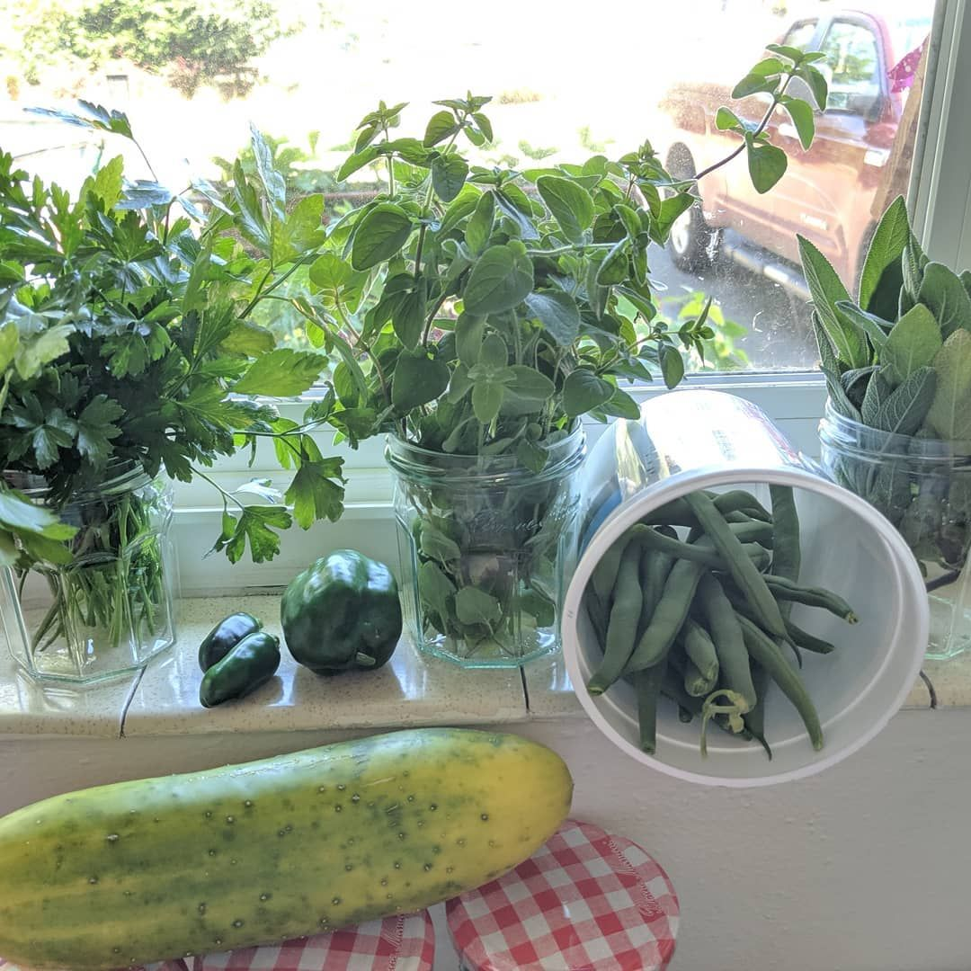 My first big harvest from my garden I would have had some strawberries too but the squirrels got to them first