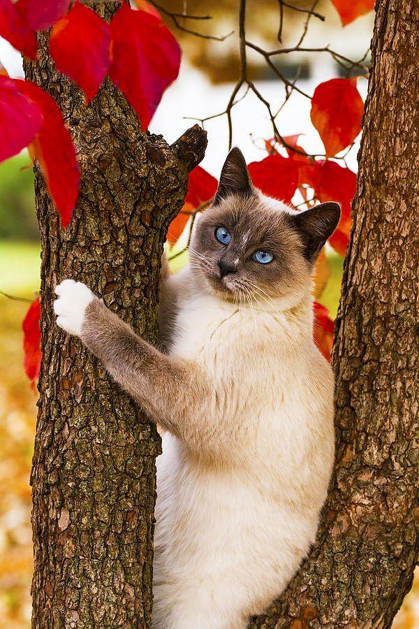 Популярные породы кошек: фото и названия | Фотографии ...