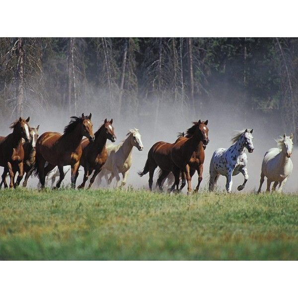 Wild Horses Free Desktop Background Liked On Polyvore Featuring Animals Pictures Backgrounds And Country