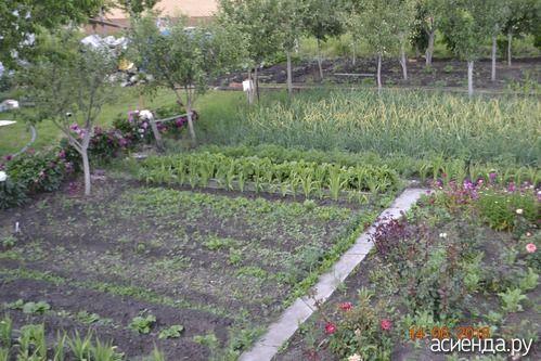 чем обработать огород после зимы